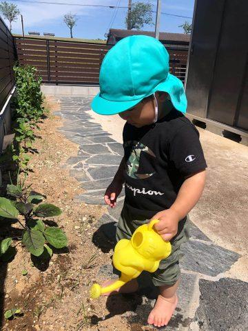 2020年 野菜の苗植え